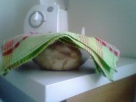 La pâte lève