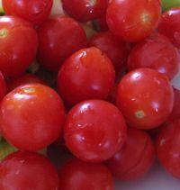 tomates cerises du jardin